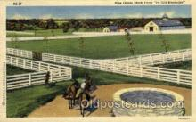 hor001307 - Blue Grass Stock Farm Old Vintage Antique Postcard Post Card