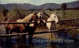 hor001331 - Old Vintage Antique Postcard Post Card