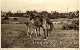 hor001333 - Old Vintage Antique Postcard Post Card
