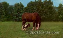 hor001335 - Gowry Ladd Clydesdale Grand Champion Old Vintage Antique Postcard Post Card