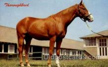 hor001337 - Thoroughbred Old Vintage Antique Postcard Post Card