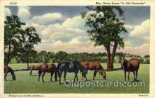 hor001345 - Blue Grass Scene Old Vintage Antique Postcard Post Card