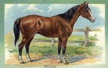 hor001363 - Horse, Horses Old Vintage Antique, Post Card Postcard