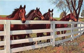 hor001367 - Friendly Gathering Free Lance Photographers Guild, Inc Postcard Post Card