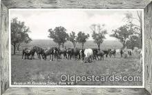 hor001379 - Horses on Mt Abundance Station Roma, WQ Postcard Post Card