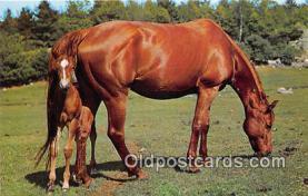 hor001394 - Texas Horse Country  Postcard Post Card