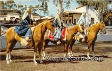 hor001401 - Pure Blodded Arabian Horses Western States Postcard Post Card
