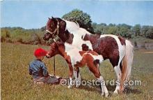 hor001406 - Mare & Colt  Postcard Post Card