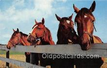 hor001409 - Horses  Postcard Post Card