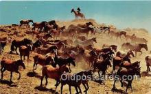 hor001410 - Herd of Horses Roundup Time Postcard Post Card