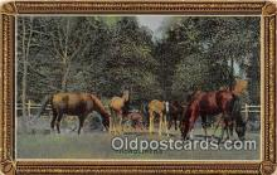 hor001411 - Thorobreds  Postcard Post Card