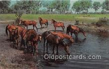 hor001414 - Thoroughbreds Stop for a Drink  Postcard Post Card