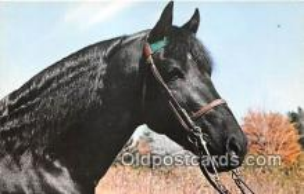 hor001415 - Emerald's Cochise AMHR Brattleboro, Vermont Postcard Post Card