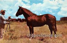 hor001416 - Famous Texas Quarter Horse Ranch Fort Worth, Texas Postcard Post Card