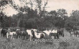 hor001435 - Pasture Scene  Postcard Post Card