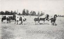 hor001438 - Spotted Brood Mares  Postcard Post Card