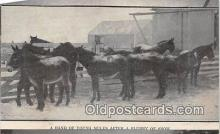 hor001448 - Band of Young Mules Hand Made Postcard Postcard Post Card