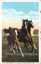 hor001466 - Three Graces WK Kellogg Arabian Horse Rance Postcard Post Card