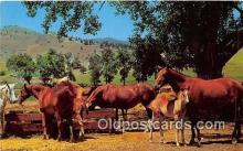 hor001513 - Horse Ranch Free Lance Photographers Guild, Inc Postcard Post Card
