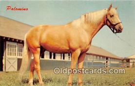 hor001515 - Palomino Color by Dexter Press, Inc Postcard Post Card