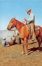 hor001516 - Branding Calves Free Lance Photographers Guild, Inc Postcard Post Card