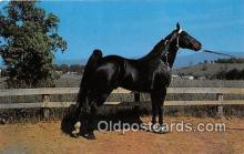 hor001537 - Champion Walking Horse Photo by Joyce L Haynes Postcard Post Card