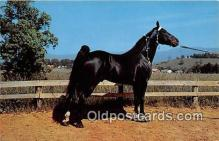 hor001541 - Champion Walking Horse Photo by Joyce L Haynes Postcard Post Card