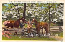 hor001555 - Dogwood Blossoms Horseback Riders Postcard Post Card