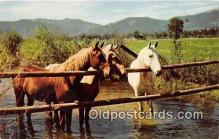 hor001558 - Waterhole  Postcard Post Card