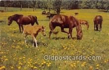 hor001559 - Horse Heaven  Postcard Post Card