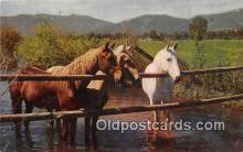 hor001560 - Waterhole  Postcard Post Card