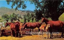 hor001568 - Spring, Horse Ranch Free Lance Photographers Guild, Inc Postcard Post Card