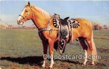 hor001570 - Golden Palomino Wester Way by RJM Postcard Post Card