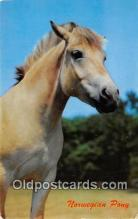 hor001578 - Norwegian Pony  Postcard Post Card
