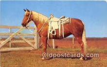 hor001580 - Ready to Ride  Postcard Post Card