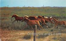 hor001585 - Wild Ponies, National Park Range Ocracoke Island, North Carolina Postcard Post Card