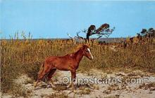 hor001587 - Wild Outter Banks Pony Ocracoke Island, North Carolina Postcard Post Card