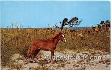 hor001588 - Wild Outer Banks Pony Ocracoke Island, North Carolina Postcard Post Card