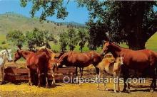 hor001590 - Horse Ranch Free Lance Photographers Guild, Inc Postcard Post Card