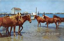 hor001595 - Outer Banks Poines Ocracoke Island, North Carolina Postcard Post Card
