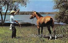 hor001598 - Texas Cowboy & his Horse Lake Benbrook, Fort Worth, TX Postcard Post Card