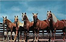 hor001600 - Palomino Partners Photo by John A Stryker Postcard Post Card