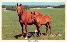 hor001608 - Mother & Son  Postcard Post Card