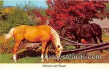 hor001609 - Palomino & Friend  Postcard Post Card