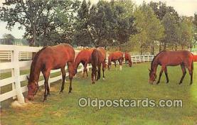 hor001616 - Green Pastures Color by Dexter Press, Inc Postcard Post Card