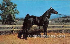 hor001617 - Champion Walking Horse Photo by Joyce L Haynes Postcard Post Card