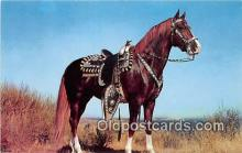hor001618 - Hoss Color by Theda & Emerson Hall Postcard Post Card