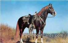 hor001619 - Hoss Color by Theda & Emerson Hall Postcard Post Card