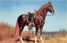 hor001620 - Hoss Color by Theda & Emerson Hall Postcard Post Card