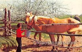 hor001622 - Feeding Time Color by APA Postcard Post Card